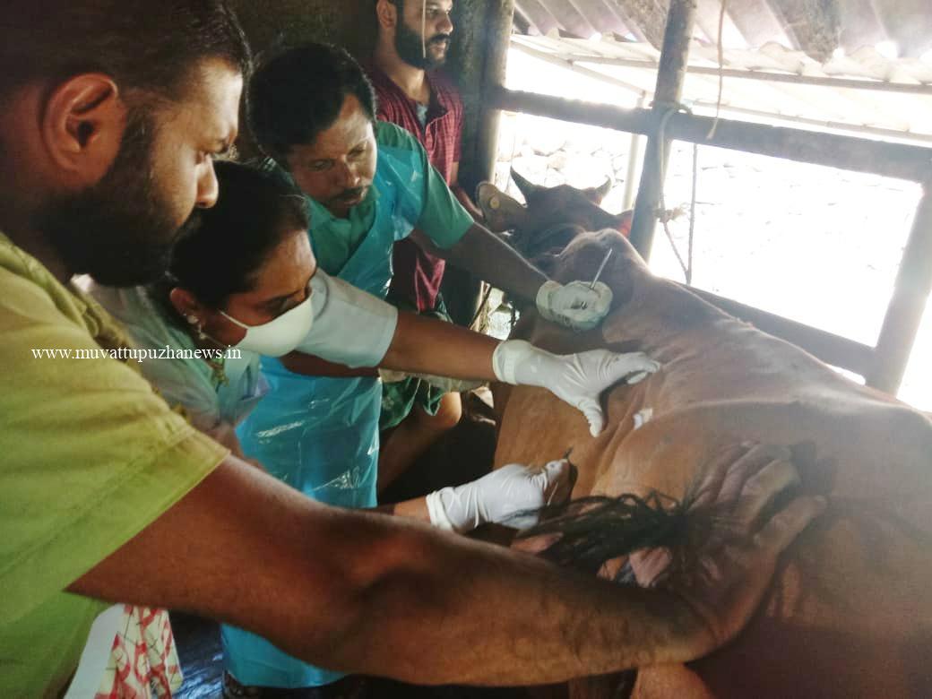 Photo of കാപ്രിപോക്സ് വൈറസ് ബാധ; ജില്ലയില് 30-പഞ്ചായത്തുകളിലായി 170-പശുക്കളില് രോഗ ലക്ഷണം കണ്ടെത്തി