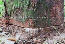 Photo of പുറമ്പോക്കിലെ ആഞ്ഞിലി മരം:മോഷണശ്രമം:- വിവാദങ്ങൾ പുകയുന്നു